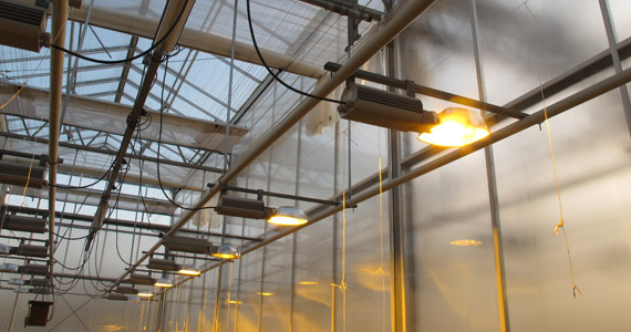 High pressure sodium lamps in a greenhouse