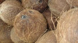Planter sur du Coco: briser le mythe