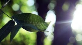 Un éclairage pour mes plantes