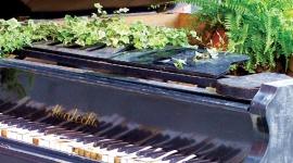 Plantes et musique