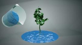 La température de l'eau pour vos plantes