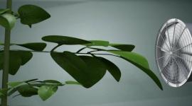 En quoi la circulation de l'air affecte-t-elle la croissance des plantes?