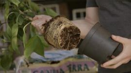 Le rempotage de vos plantes