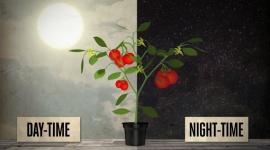 Des températures diurnes et nocturnes optimales