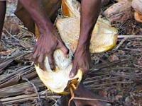 La fibre de coco en général